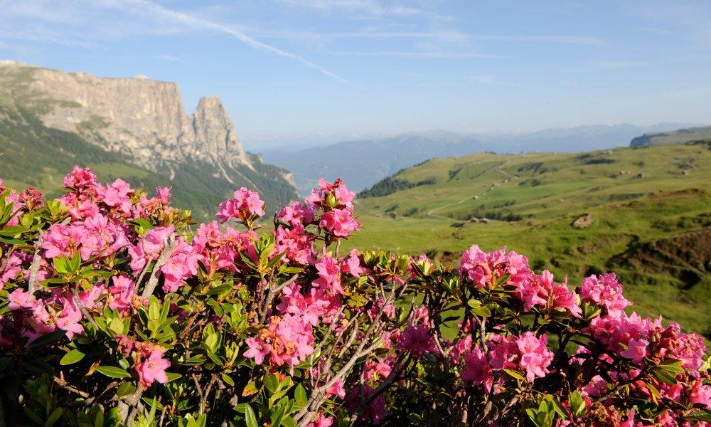 Der Sommerurlaub in Südtirol Katstelruth