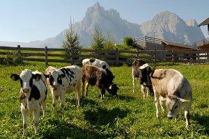 Bauernhofurlaub Kastelruth 1