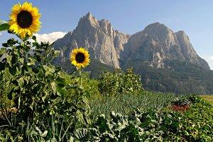 Sommerurlaub in Südtirol 1