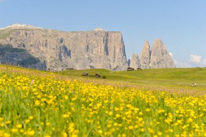Sommerurlaub in Südtirol 3