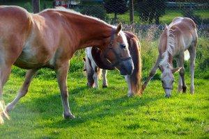 Unsere Tiere auf dem Bauernhof 4