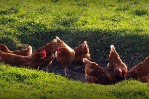 Unsere Tiere auf dem Bauernhof 3