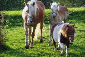 Unsere Tiere auf dem Bauernhof 5